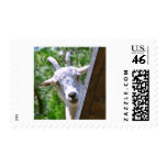 Smiling Goat Stamps