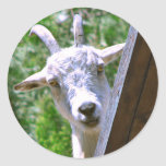 Smiling Goat stickers