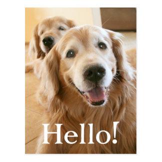 Smiling Golden Retriever Hello Postcard