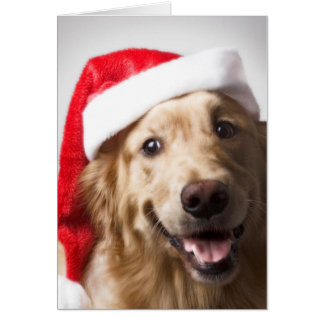 Smiling Golden Retriever Santa Hat Card