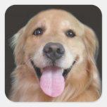 Smiling Golden Retriever Square Sticker