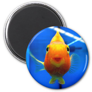 Smiling Goldfish Round Magnet