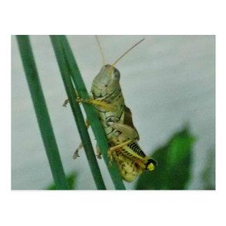 Smiling Grasshopper card