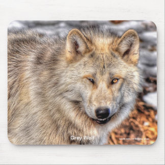 Smiling Grey Wolf in Winter Snow Mouse Pad