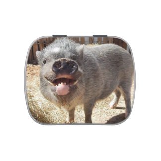 Smiling, Happy, Grey Mini Pig Jelly Belly Candy Tins