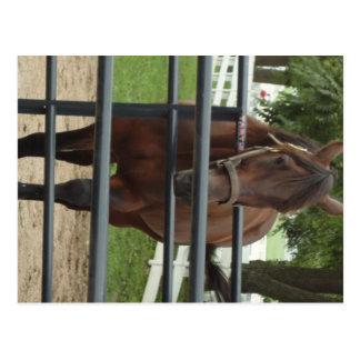 smiling horse postcard