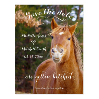 Smiling Horse Save the Date Postcards