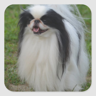 Smiling Japanese Chin Square Stickers