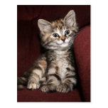 Smiling kitten postcard
