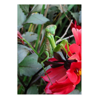 Smiling Mantis ~ ATC Large Business Cards (Pack Of 100)