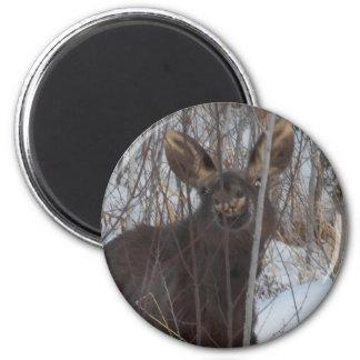 Smiling Moose Magnet