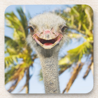 Smiling Ostrich Beverage Coaster