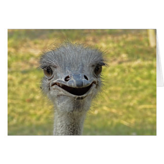 Smiling Ostrich Note Card