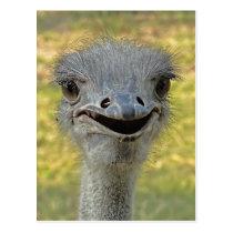 Smiling Ostrich Postcard 2