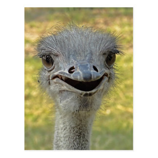 Smiling Ostrich Postcard 2