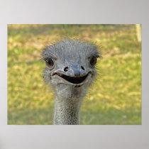 Smiling Ostrich Print