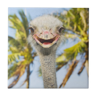 Smiling Ostrich Tile