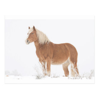 Smiling Palomino Horse in the Snow Postcard