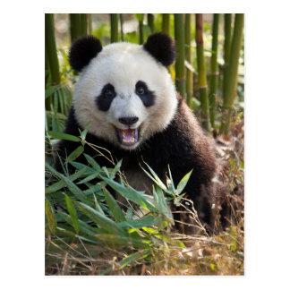 Smiling Panda Portrait Postcard