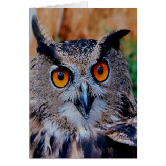 smiling peacelful  owl Eagle Greeting Cards