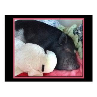 Smiling Pig Postcard