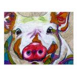 Smiling piggy! postcard