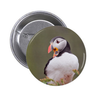Smiling Puffin Pinback Button