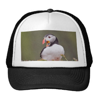 Smiling Puffin Trucker Hat