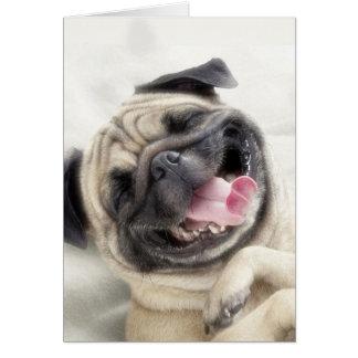 Smiling pug.Funny pug Card