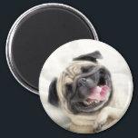 "Smiling pug.Funny pug Magnet<br><div class=""desc"">dog&#160;, pug&#160;, puppies&#160;, cute&#160;, &quot;pug cute&quot;, puppy&#160;, pugs&#160;, &quot;funny pug&quot;&#160;, &quot;happy pug&quot;&#160;, &quot;smiling pug&quot;&#160;, happy&#160;, smile&#160;, funny&#160;, pet&#160;, humor&#160;, lovely&#160;, little&#160;, pets&#160;, adorable&#160;, &quot;pug puppies&quot;&#160;, domestic&#160;, &quot;pug dog&quot;&#160;, doggy&#160;, smiling&#160;, &quot;pug puppy&quot;&#160;, &quot;puggle puppies&quot;&#160;, &quot;pug dogs&quot;&#160;, &quot;puppy pugs&quot;&#160;, &quot;puppy pug&quot;&#160;, &quot;pugs puppies&quot;&#160;, &quot;dog pug&quot;&#160;, &quot;pug funny&quot;&#160;, &quot;little pug&quot;&#160;, &quot;pug smiling&quot;&#160;, &quot;adorable...</div>"