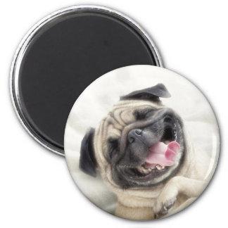 Smiling pug.Funny pug Magnet