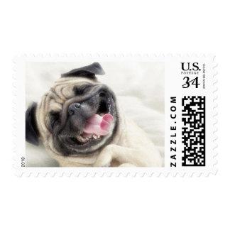 Smiling pug.Funny pug Postage