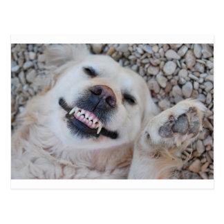 Smiling retriever postcard