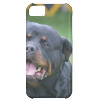 Smiling Rottweiler Case For iPhone 5C
