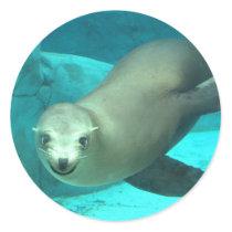 Smiling Sea Lion - Saint Louis Zoo Classic Round Sticker