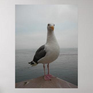 Smiling Seagull Print