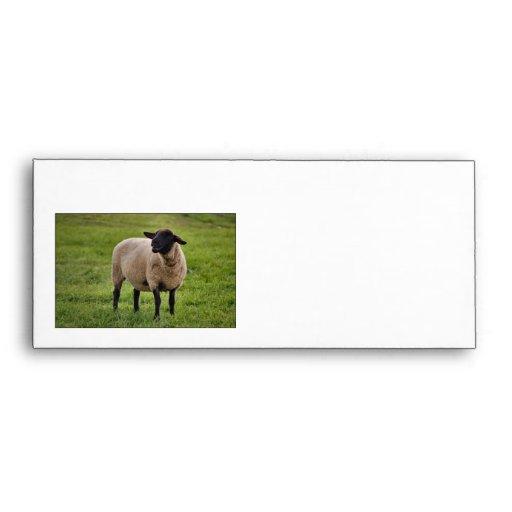 Smiling Sheep Envelope
