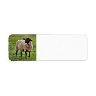 Smiling Sheep Custom Return Address Labels