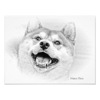 Smiling Shiba Inu dog Photo Print