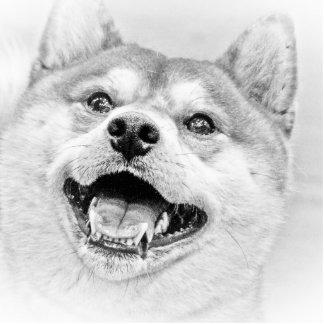 Smiling Shiba Inu dog Statuette