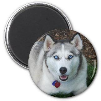 Smiling Siberian Husky Fridge Magnets