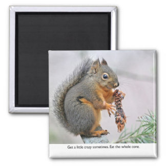 Smiling Squirrel Eating Pine Cone Magnets