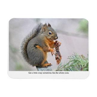 Smiling Squirrel Eating Pine Cone Vinyl Magnet