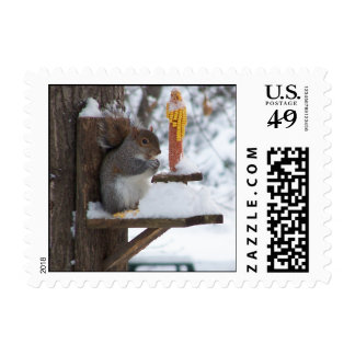 Smiling Squirrel Postage