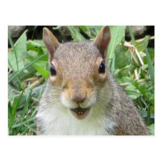 Smiling Squirrel Postcard