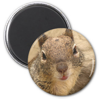 Smiling Squirrel round magnet