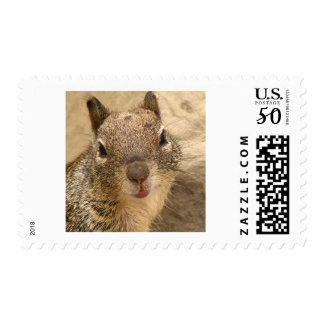 Smiling Squirrel stamp 1