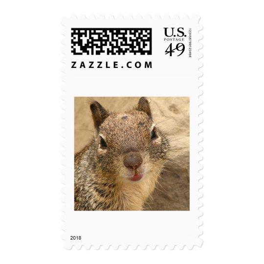 Smiling Squirrel stamp 2