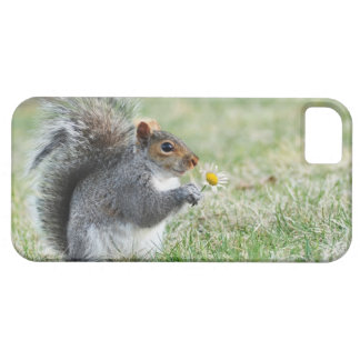 Smiling Squirrel with Daisy iPhone 5 Cases