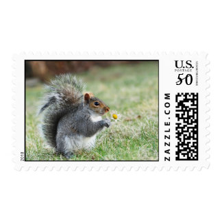smiling squirrel with daisy postage